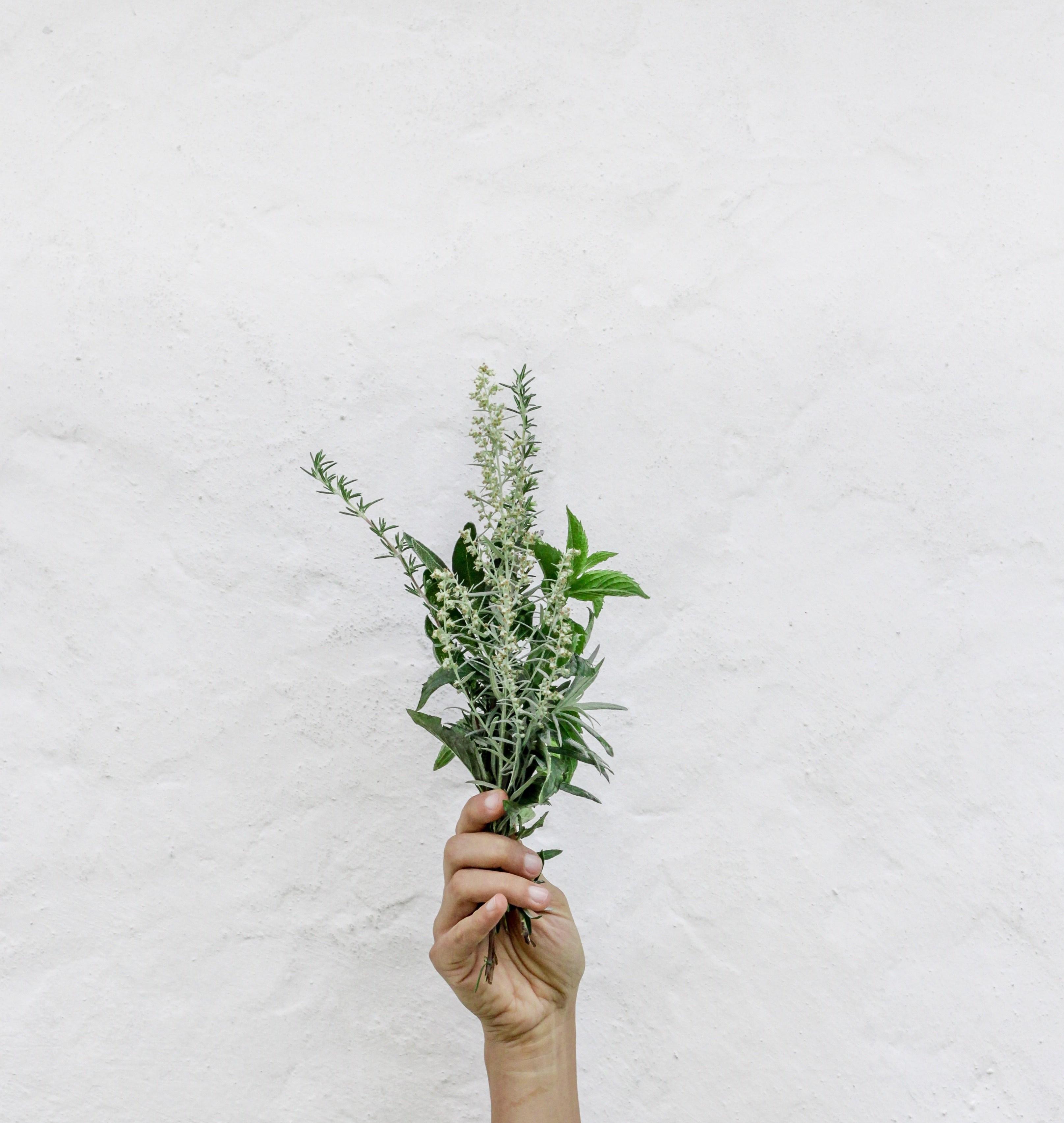herbes 1